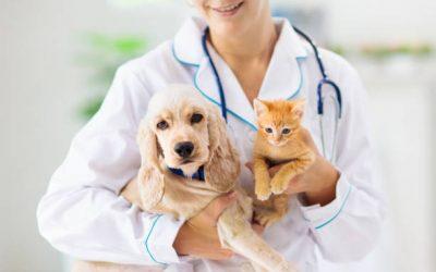 The Best Veterinary Scholarships Across The World